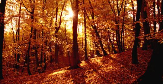 Осень – время преображения!